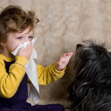 Аллергия на шерсть животных у детей: симптомы, способы борьбы и лекарства