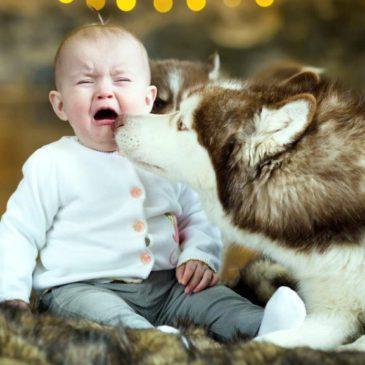 Что делать, если у ребенка появилась аллергия на собаку: симптомы и лечение повышенной чувствительности