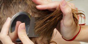 Вши у ребенка: что делать, как они выглядят в волосах у детей с фото?