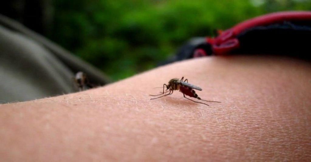 комар укусил в веко как снять отек